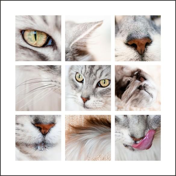 Raja Close-Ups1