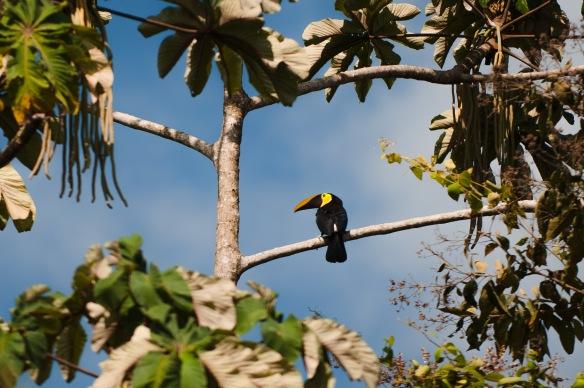 Costa Rica-109